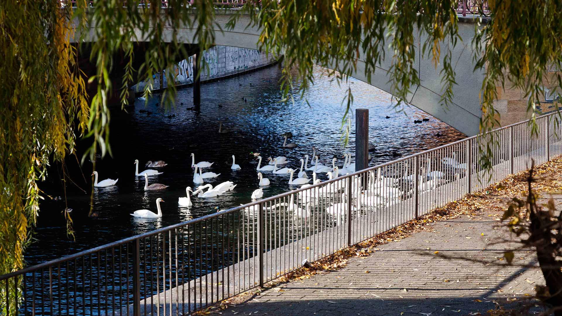 Spindler Garten Schwaene